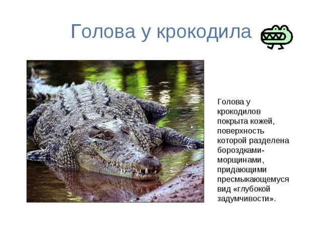 Голова у крокодила Голова у крокодилов покрыта кожей, поверхность которой разделена бороздками-морщинами, придающими пресмыкающемуся вид «глубокой задумчивости».