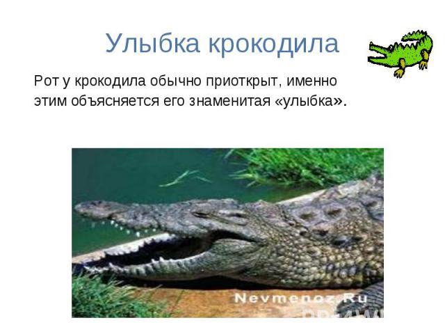 Улыбка крокодила Рот у крокодила обычно приоткрыт, именно этим объясняется его знаменитая «улыбка».
