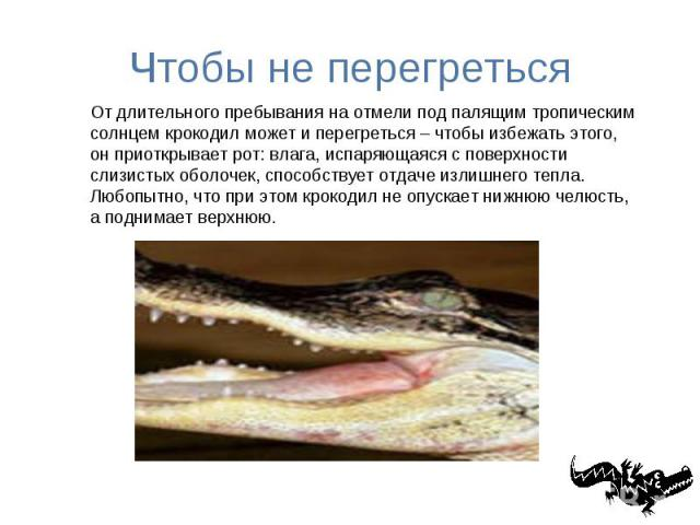 Чтобы не перегреться От длительного пребывания на отмели под палящим тропическим солнцем крокодил может и перегреться – чтобы избежать этого, он приоткрывает рот: влага, испаряющаяся с поверхности слизистых оболочек, способствует отдаче излишнего те…