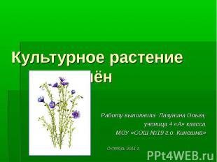 Культурное растение лён Работу выполнила Лазунина Ольга, ученица 4 «А» класса МО