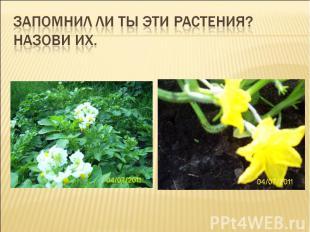 Запомнил ли ты эти растения? Назови их.