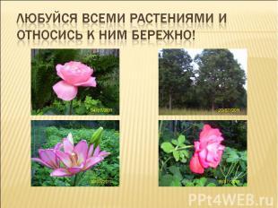Любуйся всеми растениями и относись к ним бережно!
