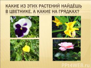 Какие из этих растений найдёшь в цветнике, а какие на грядках?