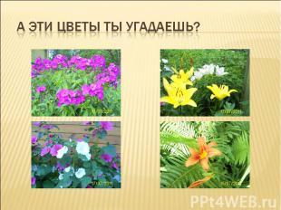 А эти цветы ты угадаешь?