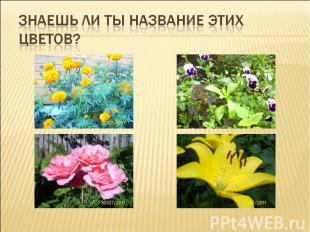 Знаешь ли ты название этих цветов?