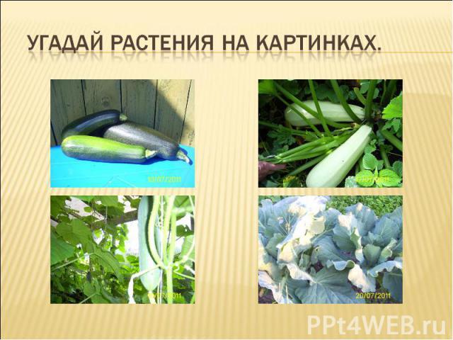 Угадай растения на картинках.