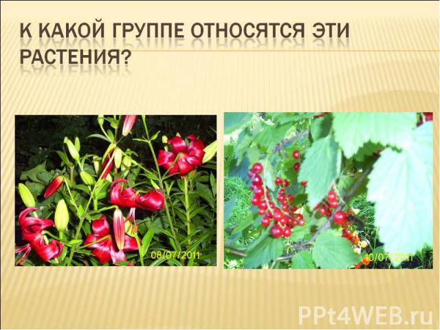 К какой группе относятся эти растения?