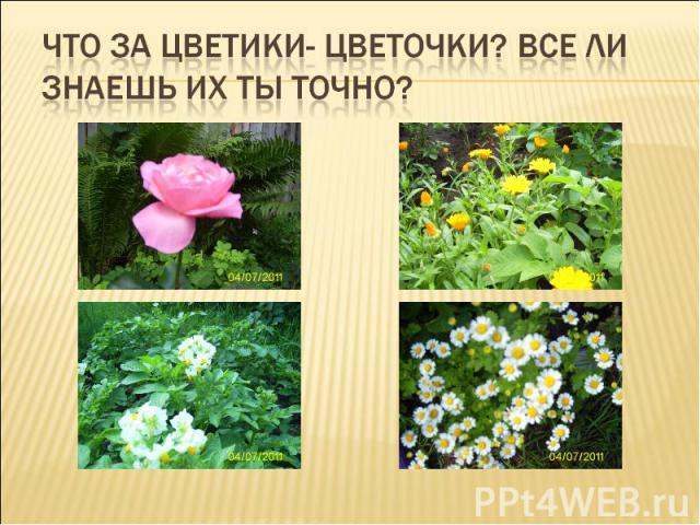 Что за цветики- цветочки? Все ли знаешь их ты точно?
