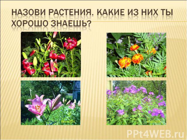 Назови растения. Какие из них ты хорошо знаешь?