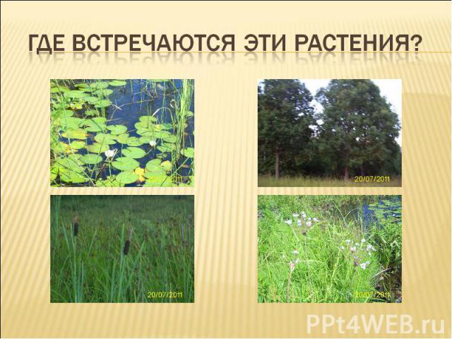 Где встречаются эти растения?