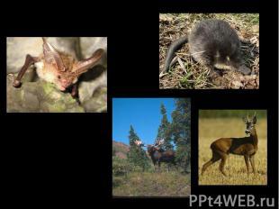 Фауна Ильменского заповедника Млекопитающих - 57 видов Птиц - 173 вида Амфибий -