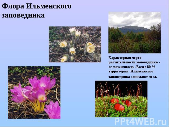 Флора Ильменского заповедника Характерная черта растительности заповедника - ее мозаичность.Более 80 % территорииИльменского заповедниказанимают леса.