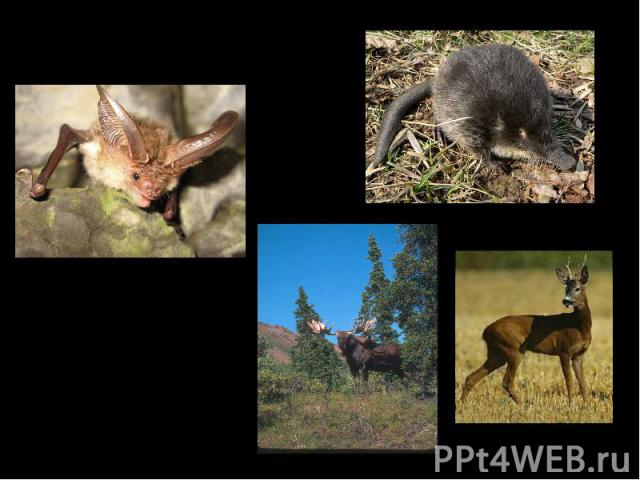 Фауна Ильменского заповедника Млекопитающих - 57 видов Птиц - 173 вида Амфибий - 5 видов Рептилий - 6 видов Рыб - 18 видов ушан выхухоль лось косуля