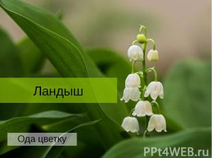 Ландыш Ода цветку