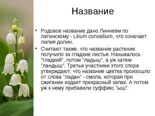 Название Родовое название дано Линнеем по латинскому - Lilium convallium, что оз