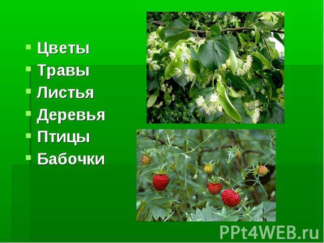 Цветы Травы Листья Деревья Птицы Бабочки