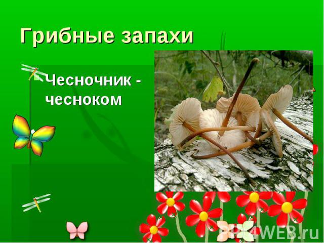 Грибные запахи Чесночник - чесноком