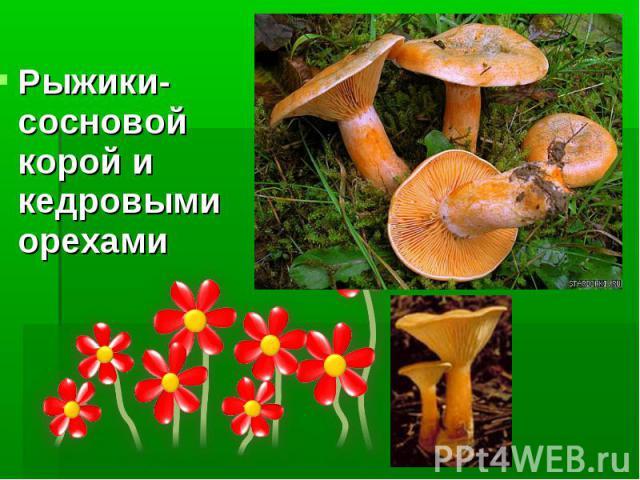 Рыжики- сосновой корой и кедровыми орехами