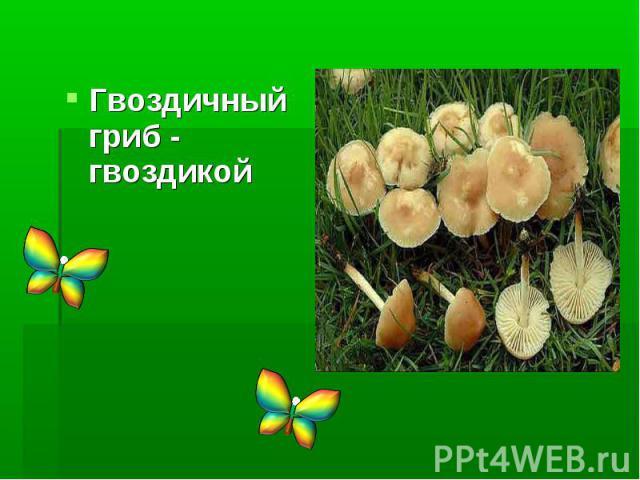Гвоздичный гриб - гвоздикой
