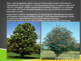 Леса с преобладаниемдубаилипы(а такжеклёнаивязав Заволжье) в Европейской