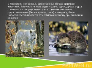 В лесостепи нет особых, свойственных только ей видов животных. Типично степные в