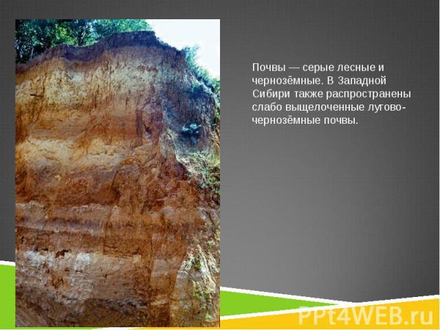 Почвы— серые лесные и чернозёмные. В Западной Сибири также распространены слабо выщелоченныелугово-чернозёмные почвы.