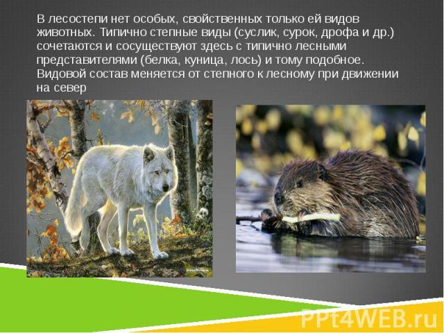 В лесостепи нет особых, свойственных только ей видов животных. Типично степные виды (суслик, сурок, дрофа и др.) сочетаются и сосуществуют здесь с типично лесными представителями (белка, куница, лось) и тому подобное. Видовой состав меняется от степ…