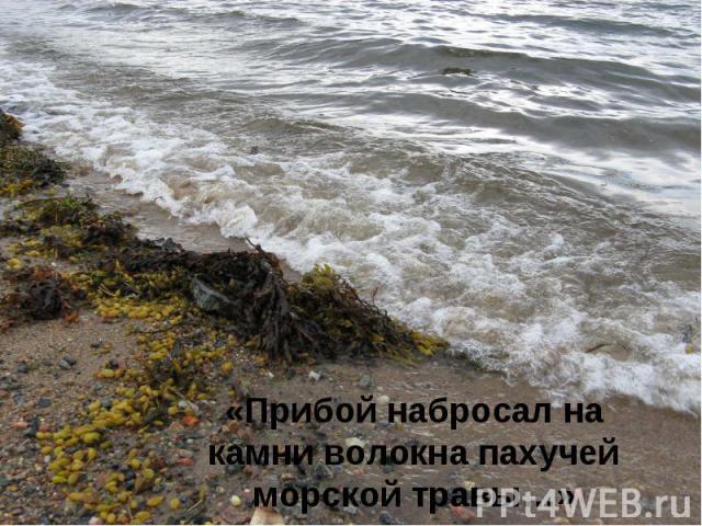 «Прибой набросал на камни волокна пахучей морской травы…»
