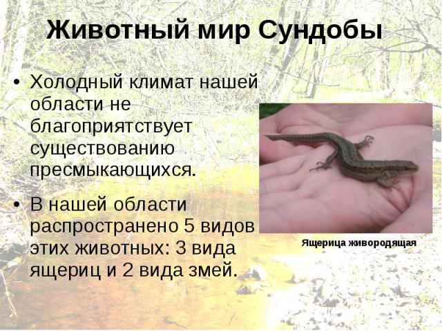 Животный мир Сундобы Холодный климат нашей области не благоприятствует существованию пресмыкающихся. В нашей области распространено 5 видов этих животных: 3 вида ящериц и 2 вида змей. Ящерица живородящая