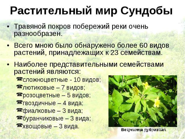 Растительный мир Сундобы Травяной покров побережий реки очень разнообразен. Всего мною было обнаружено более 60 видов растений, принадлежащих к 23 семействам. Наиболее представительными семействами растений являются: сложноцветные - 10 видов; лютико…