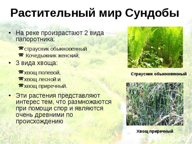Растительный мир Сундобы На реке произрастают 2 вида папоротника: страусник обыкновенный Кочедыжник женский; 3 вида хвоща: хвощ полевой, хвощ лесной и хвощ приречный. Эти растения представляют интерес тем, что размножаются при помощи спор и являются…