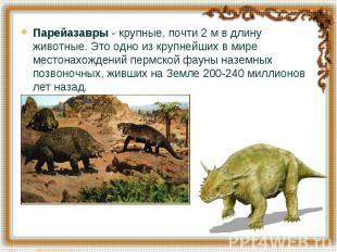 Парейазавры - крупные, почти 2 м в длину животные. Это одно из крупнейших в мире