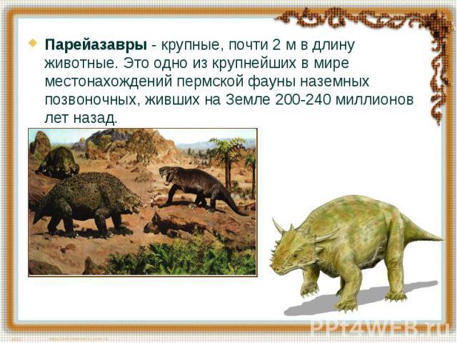 Парейазавры - крупные, почти 2 м в длину животные. Это одно из крупнейших в мире местонахождений пермской фауны наземных позвоночных, живших на Земле 200-240 миллионов лет назад.