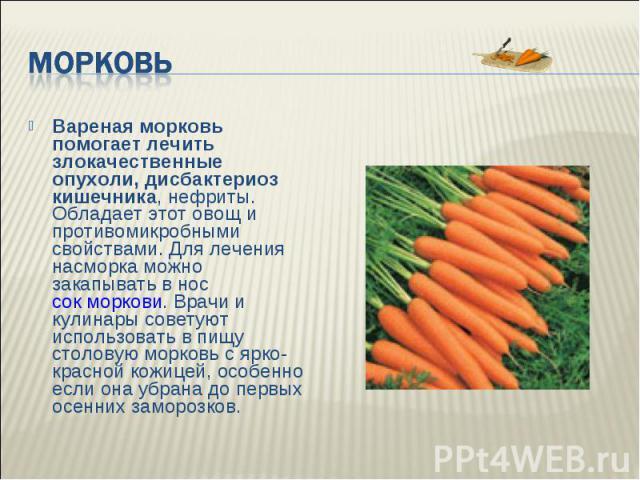Доклад на тему морковь 1814