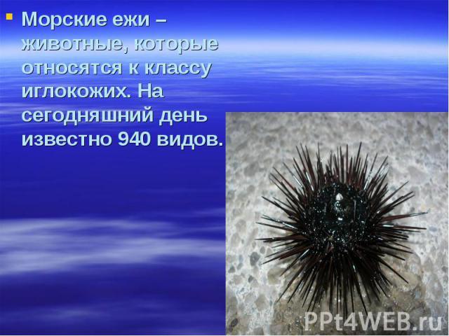 Морские ежи – животные, которые относятся к классу иглокожих. На сегодняшний день известно 940 видов.