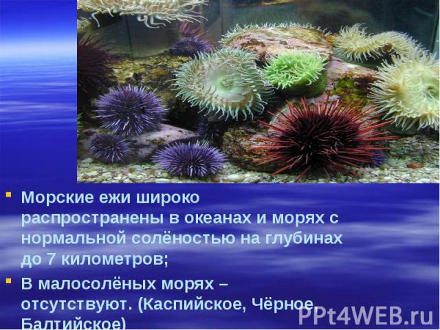 Морские ежи широко распространены в океанах и морях с нормальной солёностью на глубинах до 7 километров; В малосолёных морях – отсутствуют. (Каспийское, Чёрное, Балтийское)