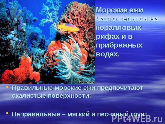 Морские ежи часто селятся на коралловых рифах и в прибрежных водах. Правильные морские ежи предпочитают скалистые поверхности; Неправильные – мягкий и песчаный грунт
