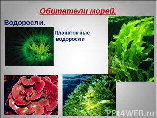 Обитатели морей. Водоросли. Планктонные водоросли