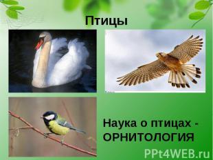Птицы Наука о птицах - ОРНИТОЛОГИЯ
