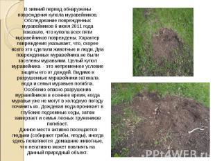 В зимний период обнаружены повреждения купола муравейников. Обследование поврежд