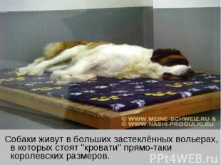 """Собаки живут в больших застеклённых вольерах, в которых стоят """"кровати"""" прямо-та"""