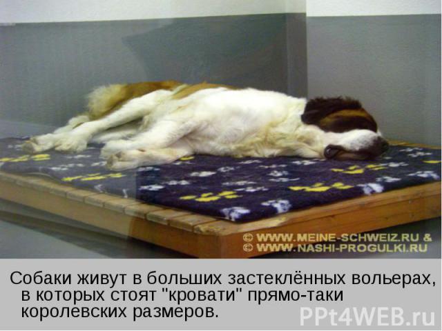 Собаки живут в больших застеклённых вольерах, в которых стоят