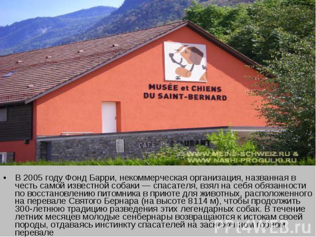 В 2005 году Фонд Барри, некоммерческая организация, названная в честь самой известной собаки — спасателя, взял на себя обязанности по восстановлению питомника в приюте для животных, расположенного на перевале Святого Бернара (на высоте 8114 м), чтоб…