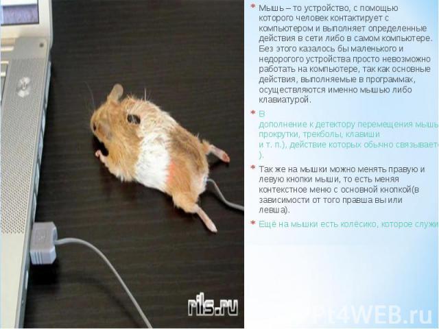 Мышь – то устройство, с помощью которого человек контактирует с компьютером и выполняет определенные действия в сети либо в самом компьютере. Без этого казалось бы маленького и недорогого устройства просто невозможно работать на компьютере, так как …