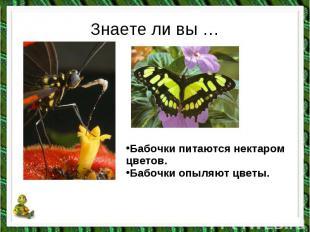 Знаете ли вы …Бабочки питаются нектаром цветов. Бабочки опыляют цветы.