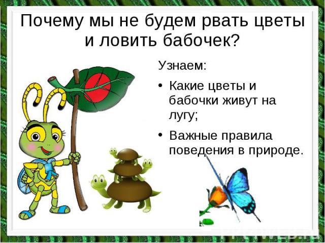 Почему мы не будем рвать цветы и ловить бабочек? Узнаем: Какие цветы и бабочки живут на лугу; Важные правила поведения в природе.