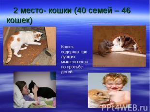 2 место- кошки (40 семей – 46 кошек) Кошек содержат как лучших мышеловов и по пр
