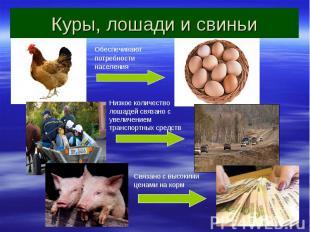 Куры, лошади и свиньи Обеспечивают потребности населения Низкое количество лошад