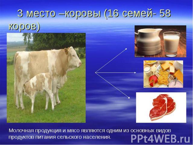 3 место –коровы (16 семей- 58 коров) Молочная продукция и мясо являются одним из основных видов продуктов питания сельского населения.