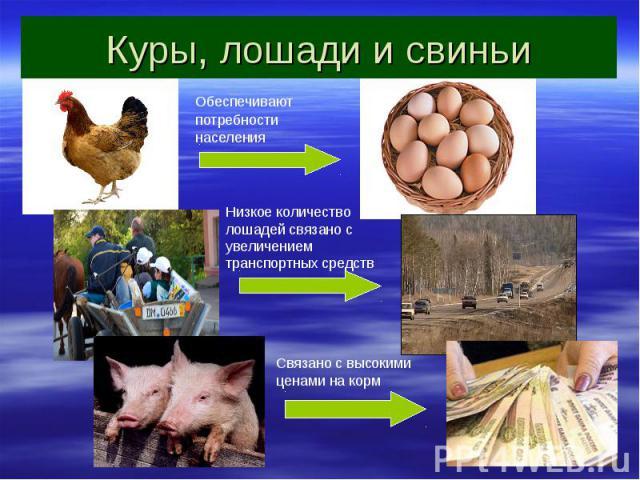 Куры, лошади и свиньи Обеспечивают потребности населения Низкое количество лошадей связано с увеличением транспортных средств Связано с высокими ценами на корм